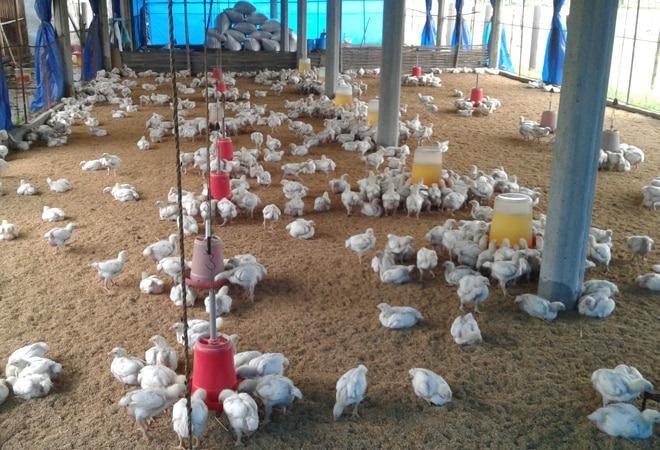 Bird Flu in Delhi 2021: महाराष्ट्र के बाद दिल्ली में भी 'बर्ड फ्लू'की पुष्टि